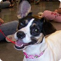 Adopt A Pet :: Jeannie - Lafayette, LA
