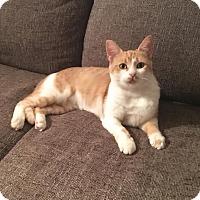 Adopt A Pet :: Eevee - Marietta, GA