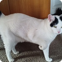 Adopt A Pet :: Lucy - Manhattan, KS