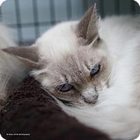 Adopt A Pet :: Astrid - Tucson, AZ