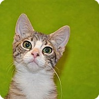 Adopt A Pet :: Priscilla - Foothill Ranch, CA