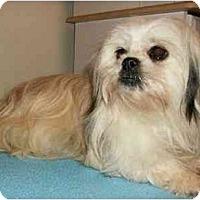 Adopt A Pet :: Selene - Mooy, AL