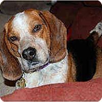 Adopt A Pet :: Abbott - Novi, MI