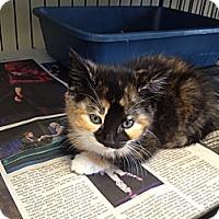 Adopt A Pet :: Lexi - Island Park, NY