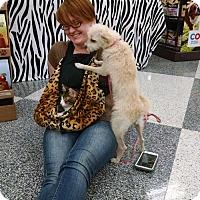 Adopt A Pet :: Poof - Monrovia, CA
