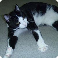 Adopt A Pet :: Martin - Hamburg, NY