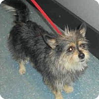 Adopt A Pet :: Angel - geneva, FL