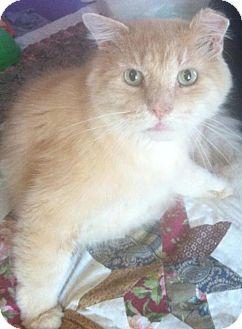 Domestic Longhair Cat for adoption in New Bedford, Massachusetts - Otis
