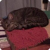 Adopt A Pet :: Thyme - Morganton, NC