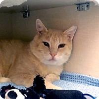 Adopt A Pet :: Lido - Toronto, ON