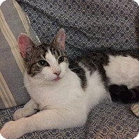 Adopt A Pet :: Gina - Elmwood Park, NJ