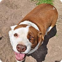 Collie Mix Dog for adoption in Iola, Texas - Harriett