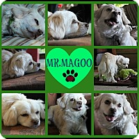 Adopt A Pet :: Mr.Magoo - Cambridge, ON