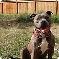 Adopt A Pet :: Nanners - Abbotsford, BC