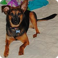 Adopt A Pet :: Max - Charlotte, NC