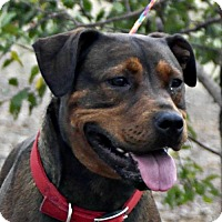 Adopt A Pet :: Sienna - Yreka, CA