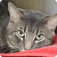 Adopt A Pet :: Flicka - Salem, MA