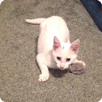 Adopt A Pet :: Denali - Eureka, CA