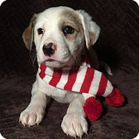 Adopt A Pet :: Nala - Kittery, ME