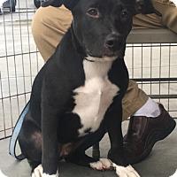 Adopt A Pet :: Jennifer - Modesto, CA