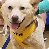 Adopt A Pet :: Igida 'Iggy' - Royal Palm Beach, FL
