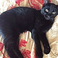 Adopt A Pet :: McGee - Byron Center, MI