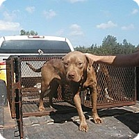 Adopt A Pet :: Louie - dawson, GA
