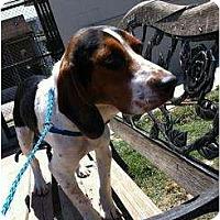 Adopt A Pet :: BOWSER - Malibu, CA