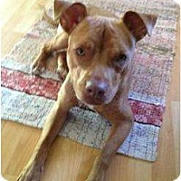 Adopt A Pet :: Annabelle - Palmyra, WI