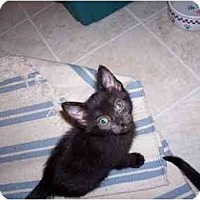 Adopt A Pet :: Blackie - Davis, CA