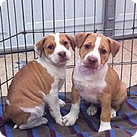 Adopt A Pet :: Willow and Zillow - Tustin, CA