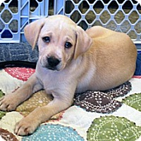 Adopt A Pet :: Dusty - Minneola, FL