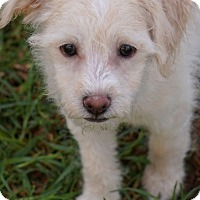 Adopt A Pet :: Misty - La Habra Heights, CA