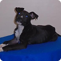 Adopt A Pet :: Wilma - Gary, IN