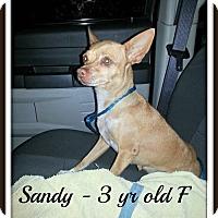 Adopt A Pet :: Sandy - Lacey, WA