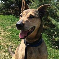 Adopt A Pet :: Chloe - New Richmond,, WI