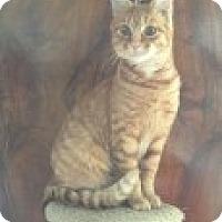 Adopt A Pet :: Candy - Manchester, CT
