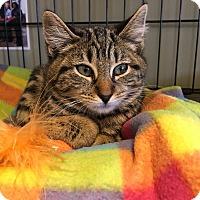 Adopt A Pet :: Holly - Island Park, NY