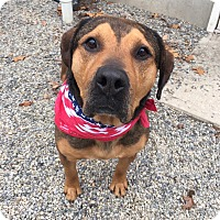 Adopt A Pet :: Hank - Oak Ridge, NJ