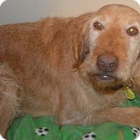 Adopt A Pet :: Maddy - Prole, IA