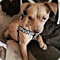 Adopt A Pet :: Betty - Phoenix, AZ