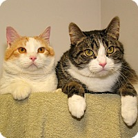 Adopt A Pet :: Damien and Woolly Mammoth - Milford, MA