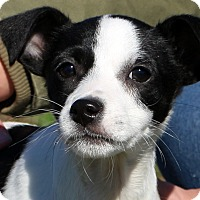 Adopt A Pet :: Bambie~ meet me! - Glastonbury, CT