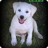 Adopt A Pet :: Texas - Denver, NC