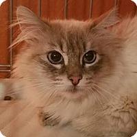 Adopt A Pet :: Godiva - Ennis, TX