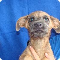 Adopt A Pet :: Finnick - Oviedo, FL