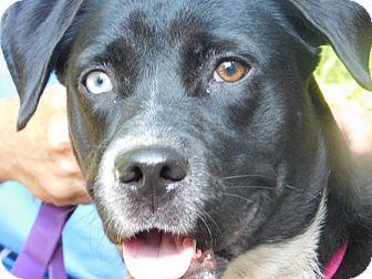 Blue Heeler/Spaniel (Unknown Type) Mix Dog for adoption in Millerstown, Pennsylvania - STELLA