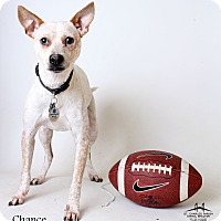 Adopt A Pet :: Chance - Luling, LA