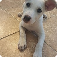 Adopt A Pet :: Calypso - Houston, TX