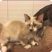 Adopt A Pet :: Ingrid - Kennedale, TX